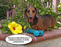 My Pal Stroganoff interior book preview. Mini doxie with yellow flower and blue toy.
