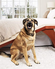 My Pal Stroganoff pet ramp for small dogs with good reviews.