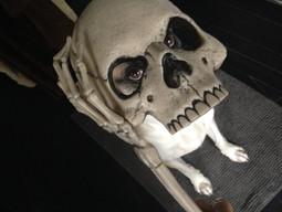 Pupi prova accessori costume