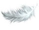 feather_PNG12958.png