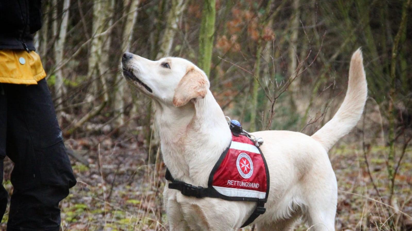 Rettungshund Hundezucht Bürger