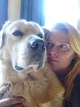 Golden Retriever Hundezucht Bürger