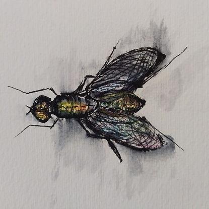 malgrado le mosche
