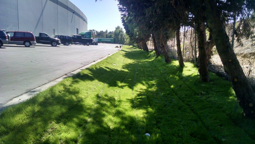 From Swale to Lawn