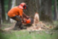 Tree Surgery West Sussex