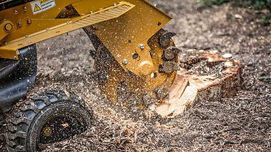 stump grinding West Sussex