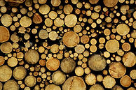 logs.jpg.scaled500.jpg