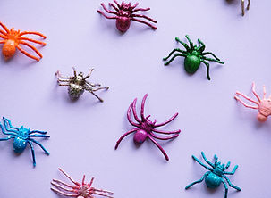 טיפול בפחד מעכבישים בתל אביב