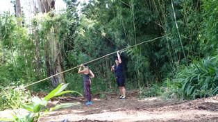 Harvesting Bamboo at Ho'oulu 'Āina