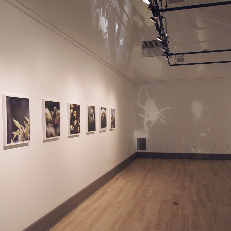 New Growth, installation view
