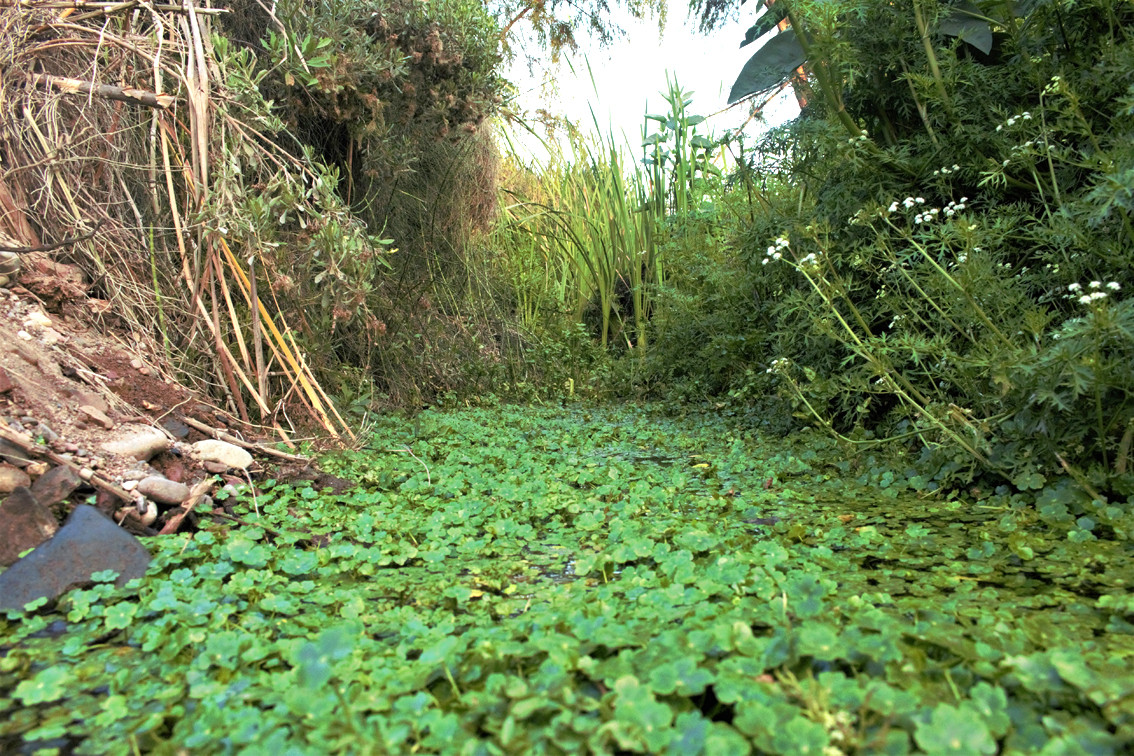 ecosistema_ribereño_2.jpg