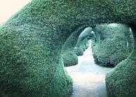 Artistic Hedge.jpg
