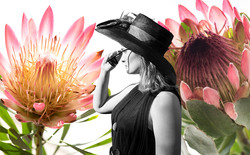 The Flowers in Our Lives JLL Revised JLL