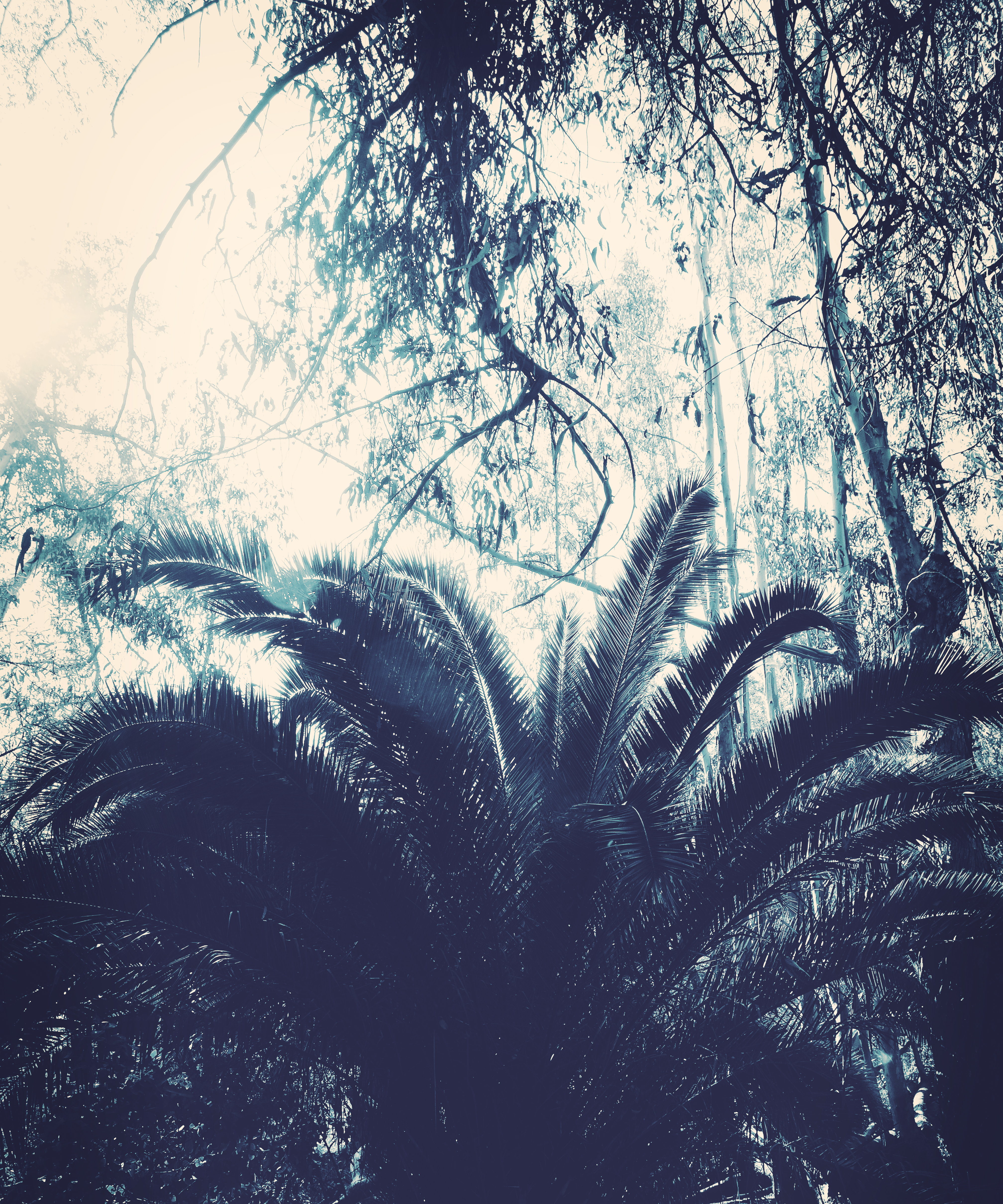 Blue Tropical 2b