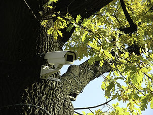 Photo of a security camera mounted in a tree