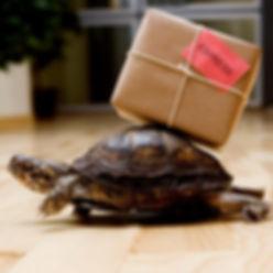 tortue-carton-lent-colis-envoyer-express