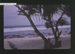 Winter Surf, Kili, 12-20-1963 - Photo by Robert Kiste, Source -Robert C Kiste Collection, UHawaii, M