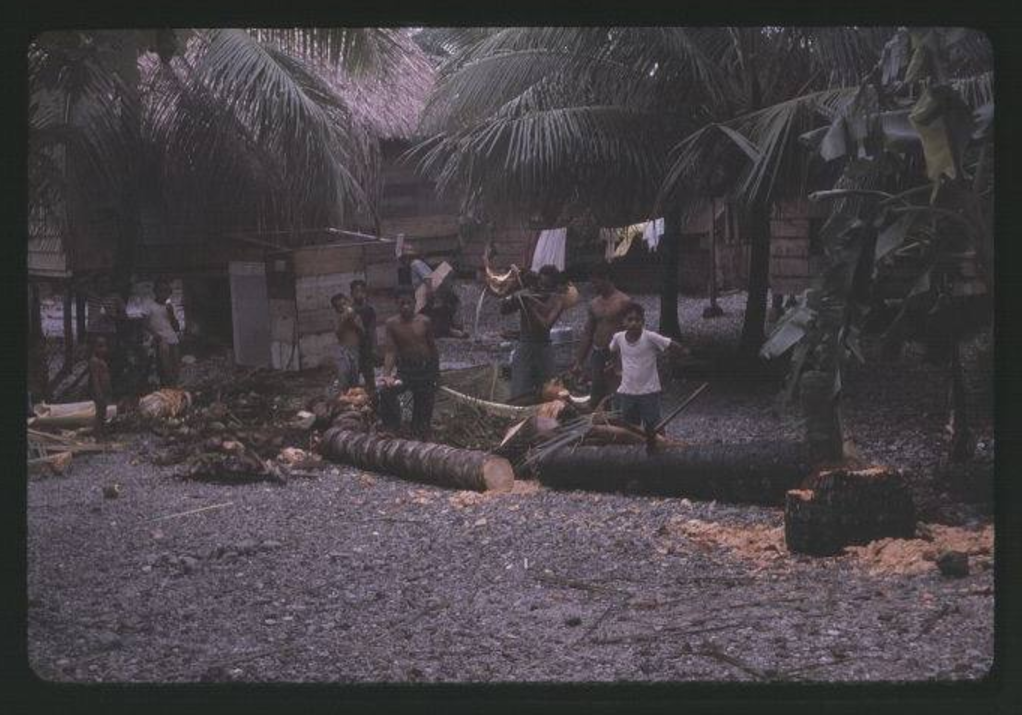 Kili Cutting coconut tree trunk, 12-20-1963 - Photo by Robert Kiste, Source -Robert C Kiste Collecti
