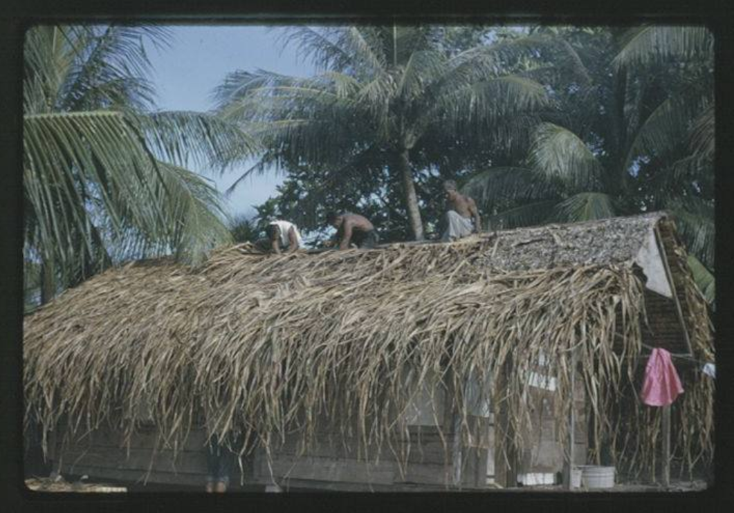 Thatching of Juda's House - 9-17-1963 - Photo by Robert Kiste, Source -Robert C Kiste Collection, UH