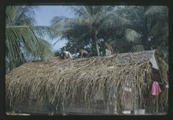 Thatching of Juda's House - 9-17-1963 - Photo by Robert Kiste, Source -Robert C Kiste Collection, UH