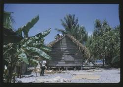 Thatching - 9-17-1963 - Photo by Robert Kiste, Source -Robert C Kiste Collection, UHawaii, Manoa