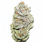 super-silver-haze-seeds-1_600x600_crop_c
