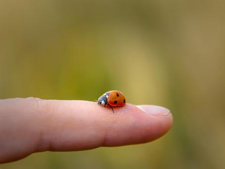 5 actions simples pour protéger les insectes