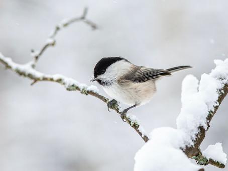 La nature se découvre aussi en plein hiver