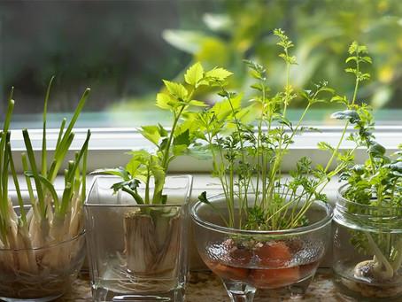 5 fruits et légumes qui repoussent tout seuls pour jardiner avec rien !