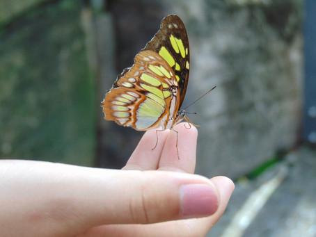 Journée de la biodiversité : 5 idées pour favoriser la biodiversité