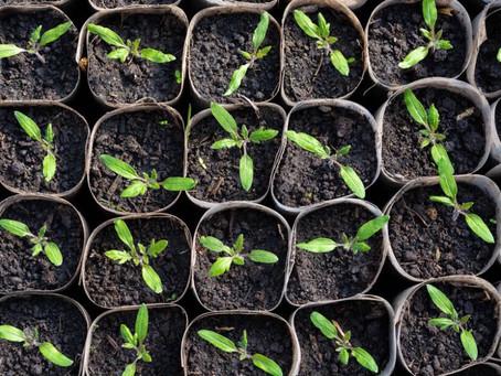Jardiner avec des enfants : les 5 erreurs à éviter pour les semis