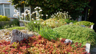 My Binstore Green Roof: 3 yrs on