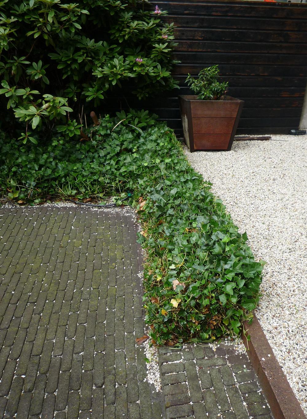 ivy edging, gravel, sett patio, brick patio, brick courtyard,