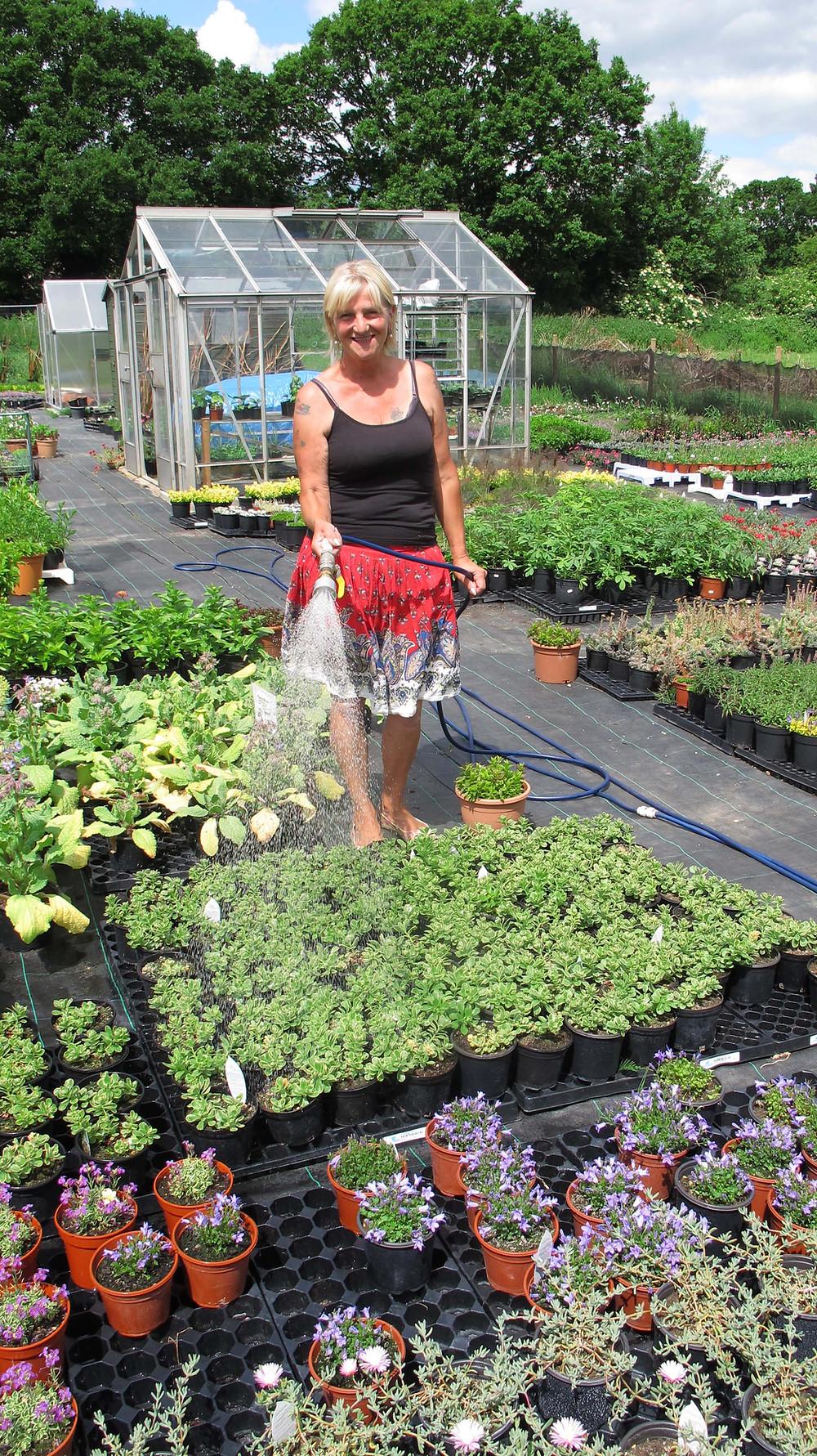 glebe alpines, Genine Riddell, Alpine and herb nursery