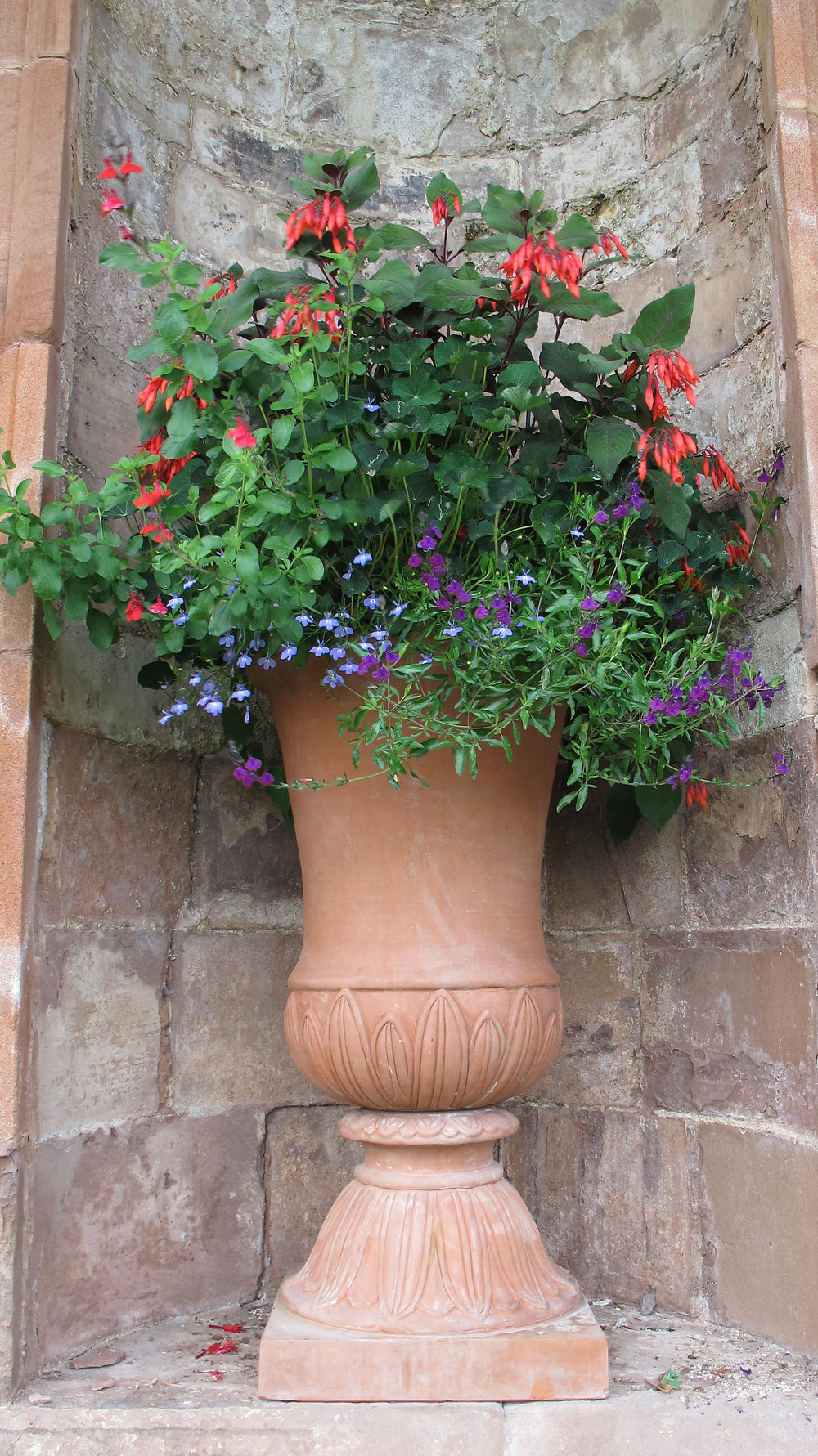 fuschia, lobelia, terracotta urn, annual container display, red and purple colour scheme, classical urn, container, plant pot,