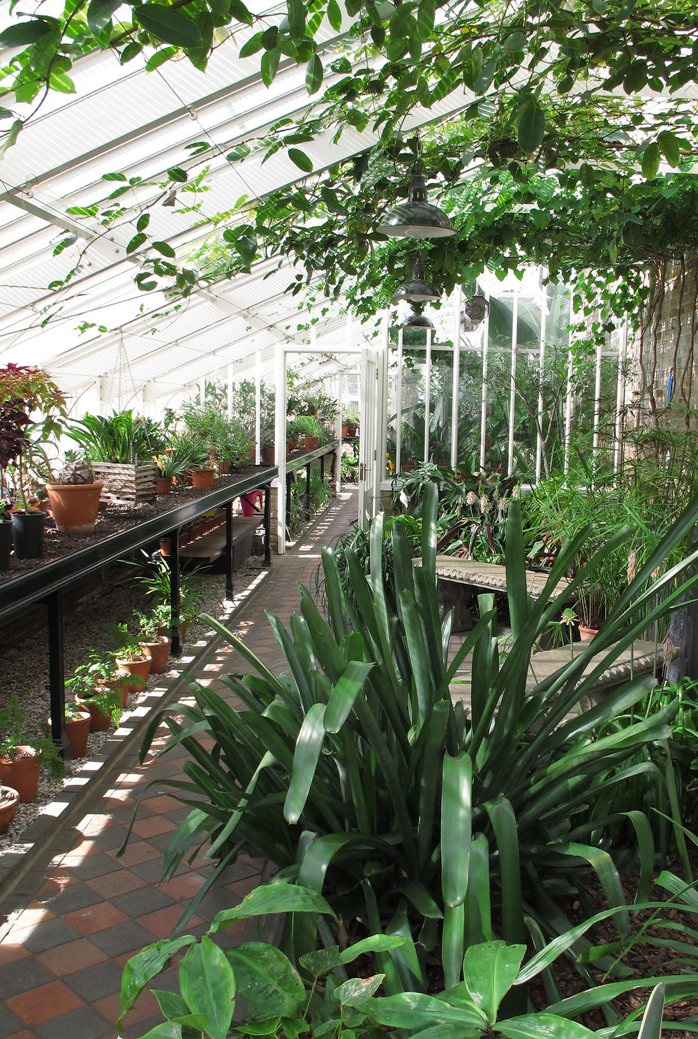 restored glasshouses, tropical plants, myddleton house gardens