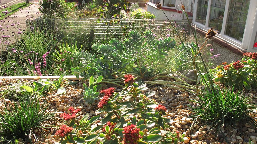 Green roof plants, alpines, succulents, herbs, gravel,