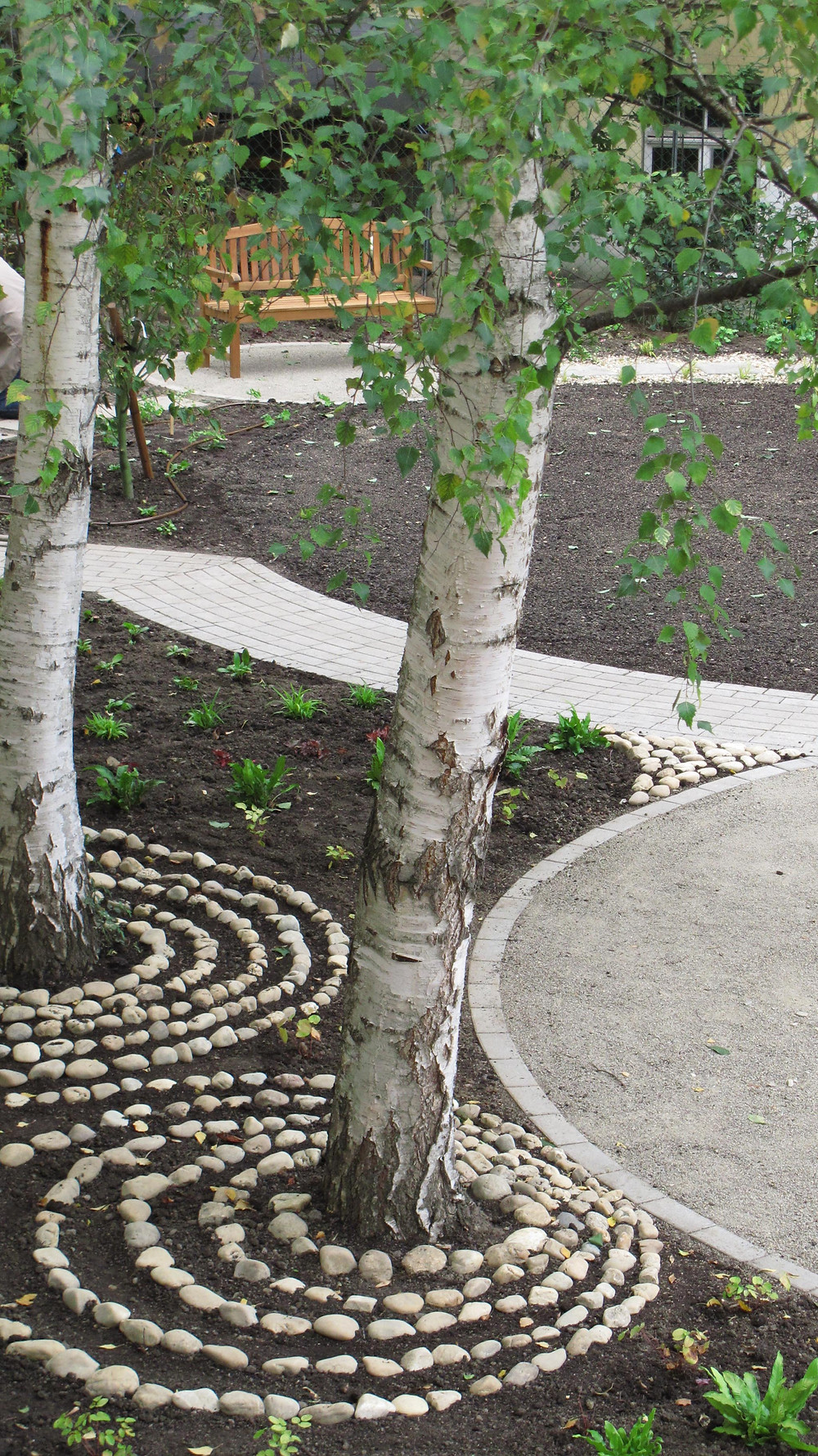 tree and path.jpg