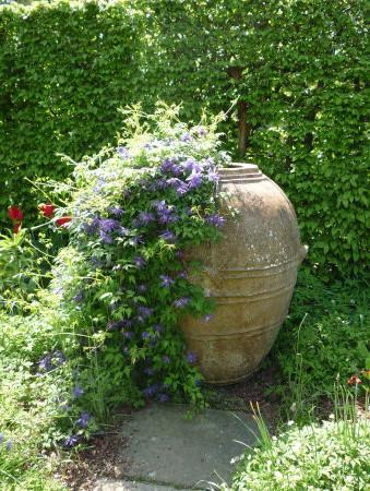 clematis, purple, spring flowering, container, urn, Mediterranean container, spice jar, sissinghurst