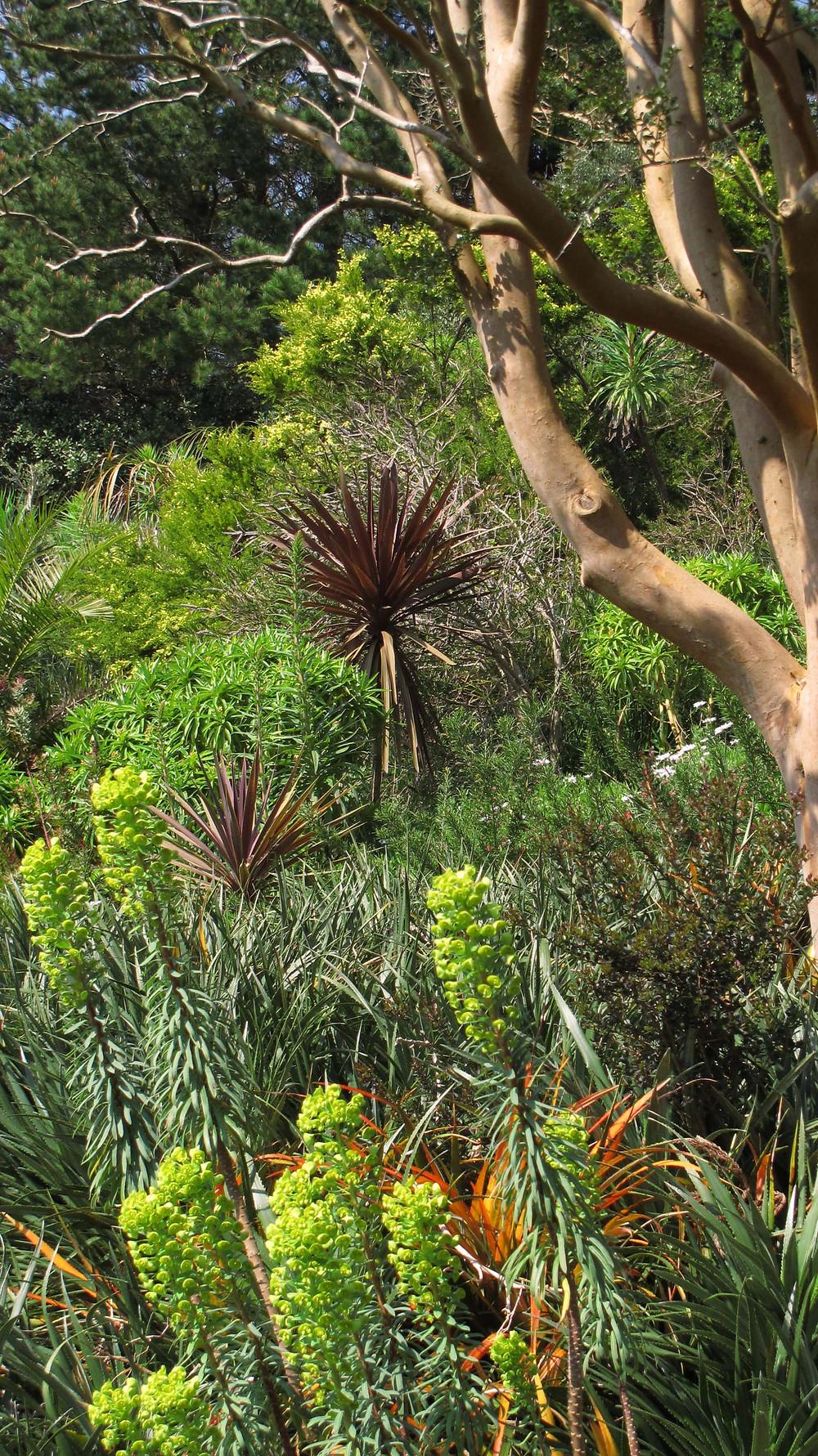 mediterannean plants, euphorbia, phormium, myrtle, devon garden
