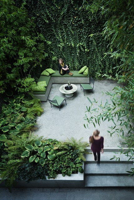 ivy, climber, cool, green courtyard, garden, outdoor cushions, concrete steps