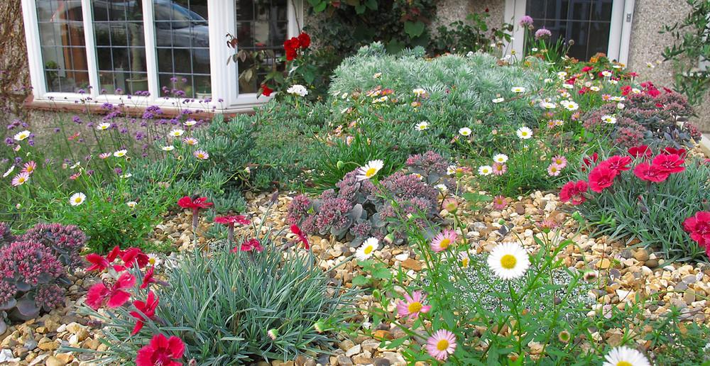 Alpines, Herbs, Dianthus, sedum, thrift, daisies, Erigeron karvinskianus, gravel, green roof plants, artemesia, alliums,