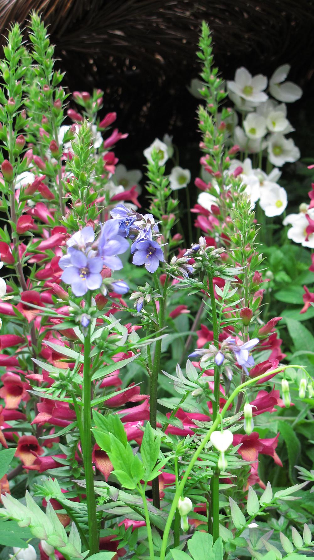 chelsea flower show, Landscape architect, Sarah Eberle, Breast Cancer, Haven Garden, RHS Chelsea, Tom Hare, willow woven oak leaf 'nest'