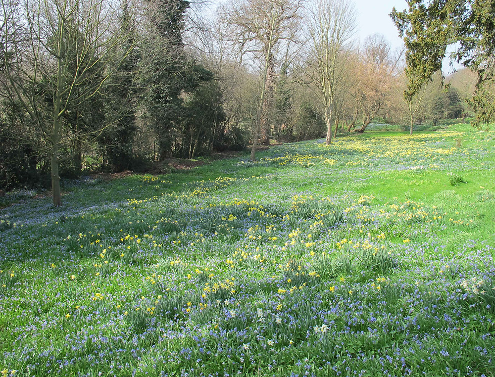 Myddleton House Gardens, alpine meadow, narcissus, daffodils, easter garden to visit,