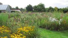 Tom Stuart Smith's Barn Garden