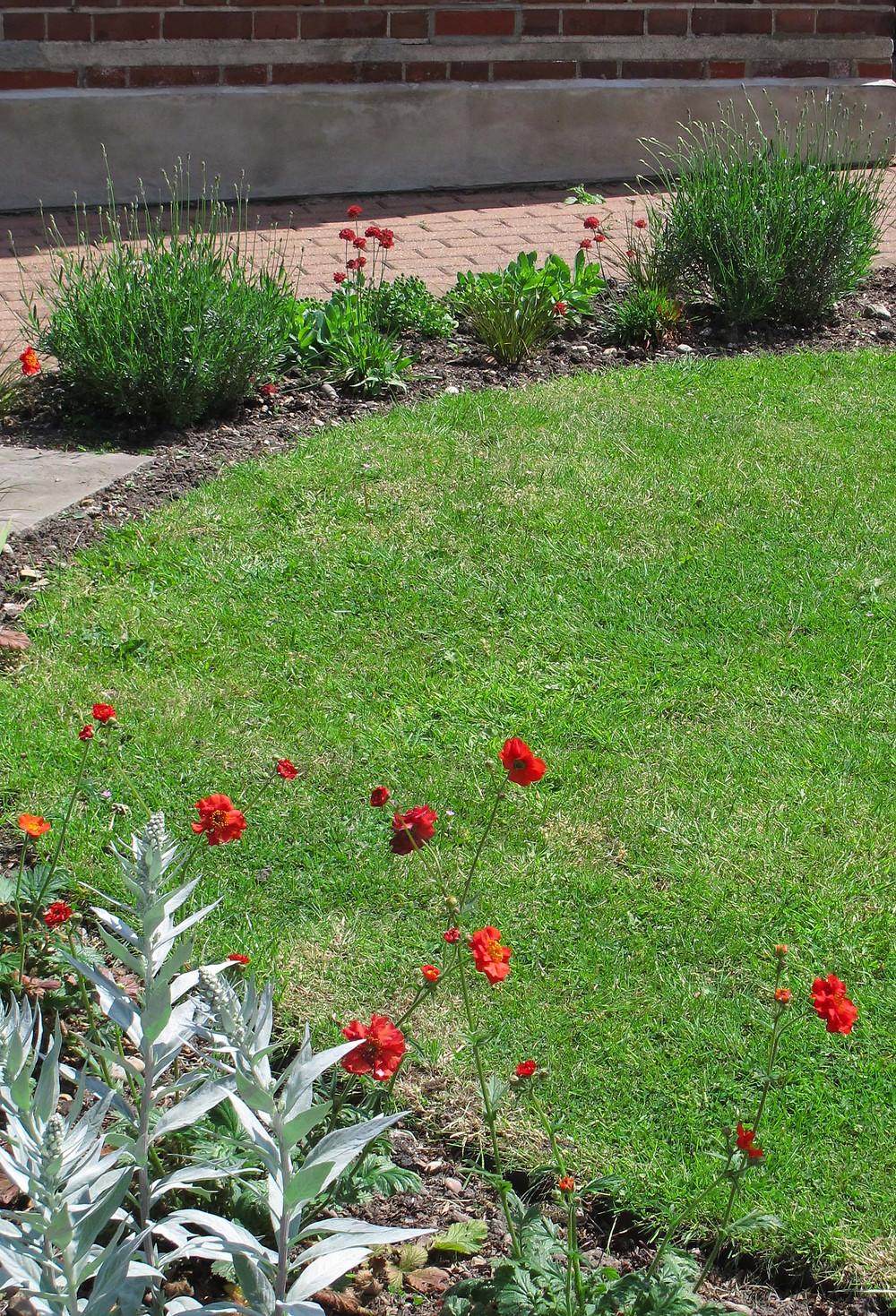 mediterranean planting in a front garden
