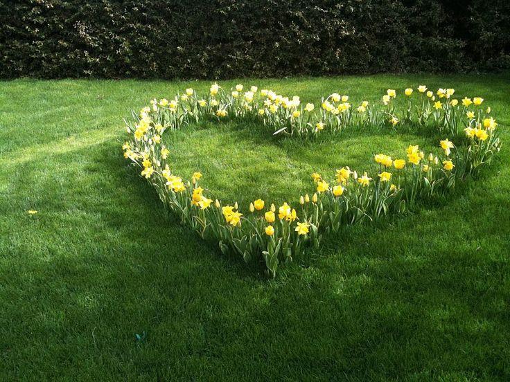 daffodil heart, flowers, romantic, bulbs, snowdrops
