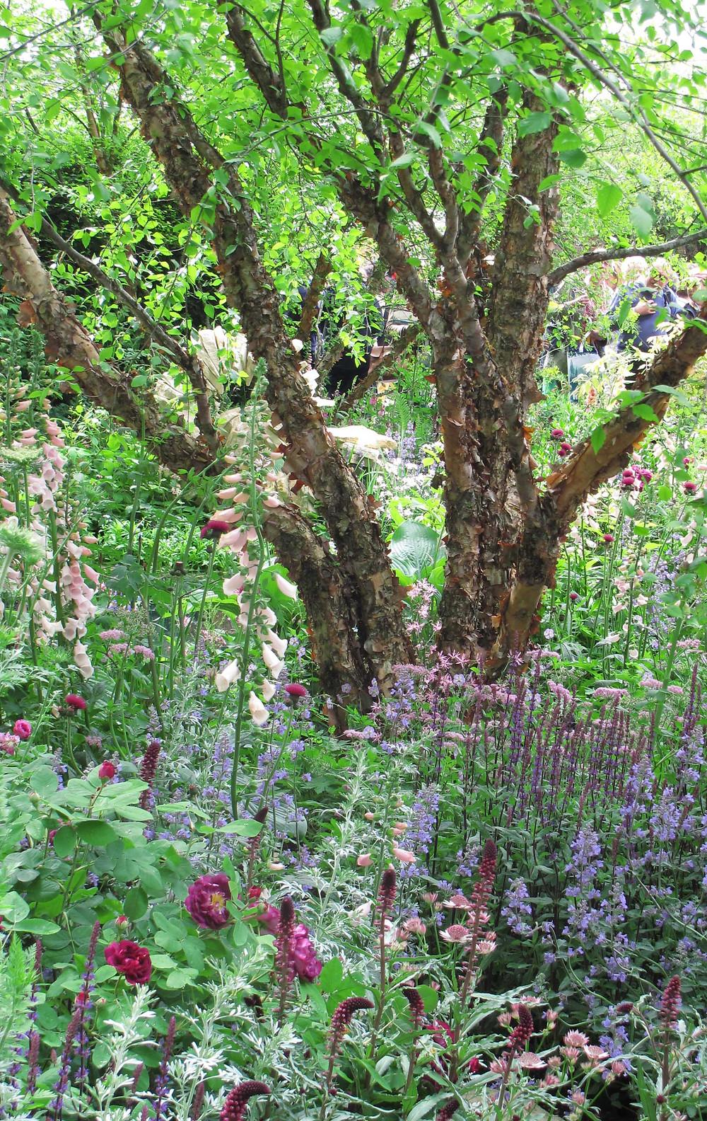 M&G Garden, oak framed building, natural swimming pond, romantic garden, jo Thompson, acer grisium