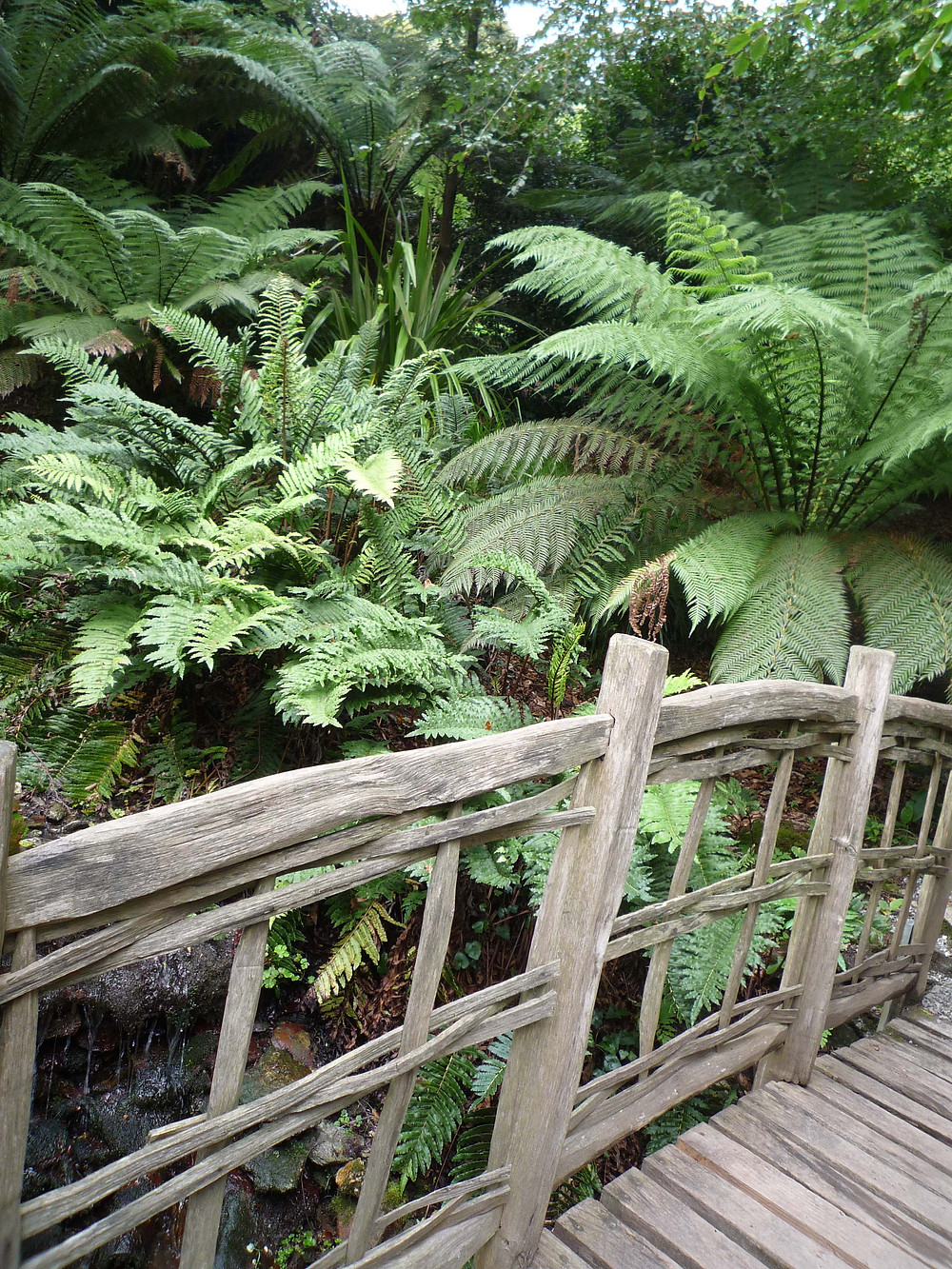 wooden bridge, secret path, stream, devon garden, japanese bridge, tree fern, ferns, tropical plants,