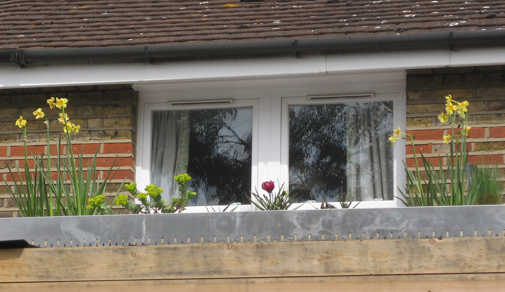 green roof bulbs and euphorbia